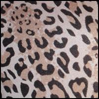 Elegant Leopard Print