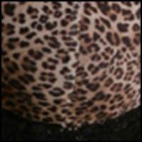 Black w/ Animal Print