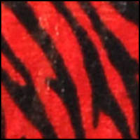 Dynasty Red Zebra