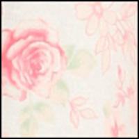 Peach Monotone Roses