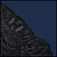 Navy/Black Lace