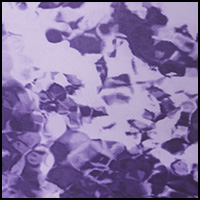 Mystic Purple Algae
