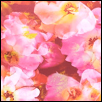 Hot Floral