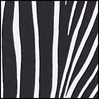 Graphic Zebra