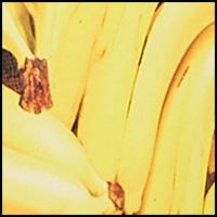Photo-Op Bananas
