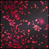 Confetti Daisy Print